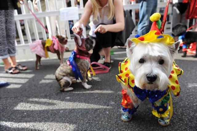 A reveller at last year's Connaught Village Summer Festival